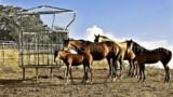 344-Horse-farm-for-sale-Tuscany-11