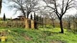 344-Horse-farm-for-sale-Tuscany-30