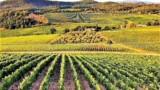 344-Horse-farm-for-sale-Tuscany-32