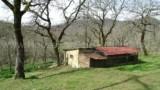 344-Horse-farm-for-sale-Tuscany-36