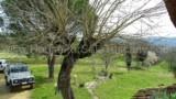 344-Horse-farm-for-sale-Tuscany-4