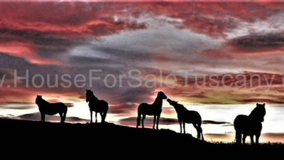 Image for Horse farm for sale Tuscany - 344