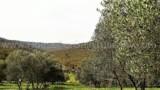 344-Horse-farm-for-sale-Tuscany-41