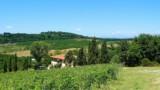 395-Villa-with-vineyard-in-Chianti-16