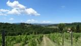395-Villa-with-vineyard-in-Chianti-25