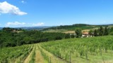 395-Villa-with-vineyard-in-Chianti-5