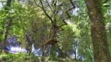 395-Villa-with-vineyard-in-Chianti-50