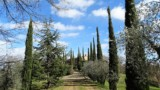 Image for Luxury Villa in Tuscany - 518