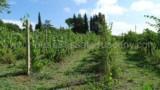 848-Monte San Savino - 6