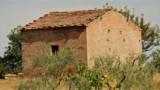 850-Torrita di Siena- 10